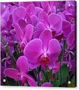 Sf Pink Flowers Acrylic Print