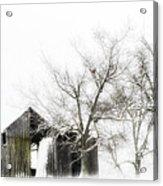 Shabby Barn Acrylic Print