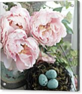 Shabby Chic Peonies With Bird Nest Robins Eggs - Summer Garden Peonies Acrylic Print