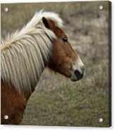 Shackleford Banks Acrylic Print