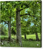 Shade Trees Acrylic Print