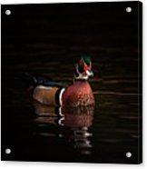Shaded Wood Duck Acrylic Print