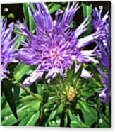 Shades Of Blue And Green Acrylic Print