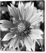 Shades Of Gray Flower By Earl's Photography Acrylic Print