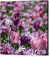 Days Of Wine And Tulips Acrylic Print