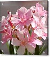 Shades Of Pink Acrylic Print