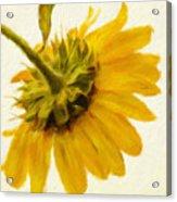 Shades Of Yellows Acrylic Print