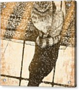 Shadow Cat Acrylic Print by Laura Brightwood