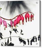 Shadow Hearts Acrylic Print