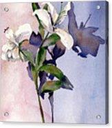 Shadow Lilies Acrylic Print