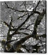 Shadow Moss Acrylic Print