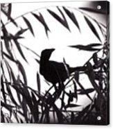 Shadow Of The Crow Acrylic Print