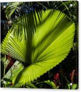 Shadow On A Ruffled Fan Palm Acrylic Print