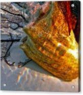 Shadow On The Shell Acrylic Print