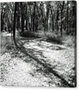 Shadow Path Acrylic Print