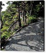 Shadow Path Acrylic Print