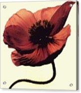 Shadow Poppy Acrylic Print