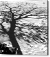 Shadow Tree  Herrick Lake  Naperville Illinois Acrylic Print