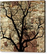 Shadow Wall Acrylic Print
