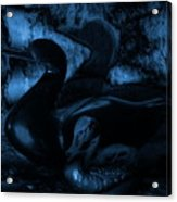 Shadowplay Acrylic Print