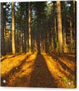 Shadows In Forrest  Acrylic Print