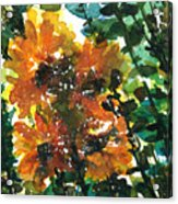 Shadows Of Sunflowers Acrylic Print