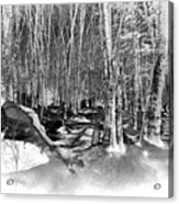 Shadows Of Winter Acrylic Print