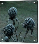 Shadowy Frozen Pods From The Darkside Acrylic Print
