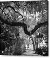 Shadowy Pathway Acrylic Print
