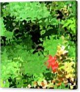 Shady Composition Acrylic Print