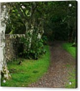 Shady Lane Acrylic Print by Warren Home Decor