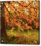 Shady Oak Acrylic Print