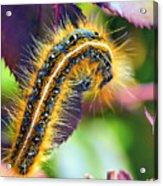 Shagerpillar Acrylic Print by Bill Tiepelman