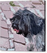 Shaggy Pup Abstract Acrylic Print