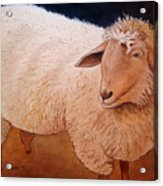 Shaggy Sheep Acrylic Print