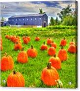 Shaker Pumpkin Harvest Acrylic Print