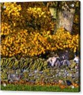 Shaker Stone Fence 4 Acrylic Print
