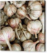 Shantung Garlic Acrylic Print