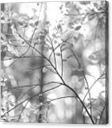 Shapes Of Nature Acrylic Print