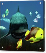 Shark And Fishes Acrylic Print