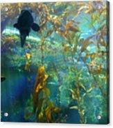 Shark Bait Acrylic Print