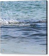 Shark Catching A Fish Acrylic Print