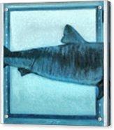 Shark In Magic Cubes - 2 Of 3 Acrylic Print