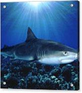 Shark In The Dark Acrylic Print