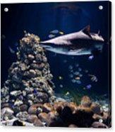 Shark In Zoo Aquarium Acrylic Print