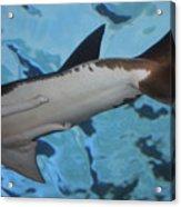 Shark Tail Acrylic Print