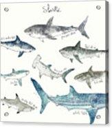 Sharks - Landscape Format Acrylic Print