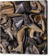 Sharks Teeth 8 Acrylic Print