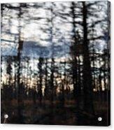 Shasta Trinity National Forest Acrylic Print