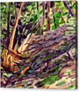 Shattered Pine Acrylic Print